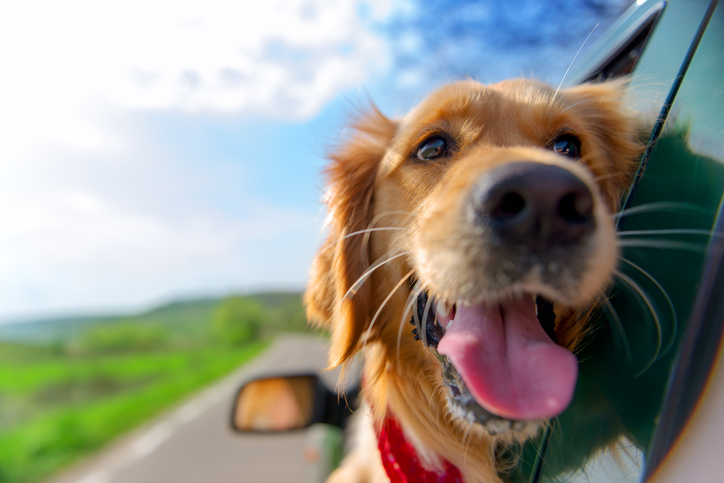 la crosse attorney answers whether driving with dogs is legal
