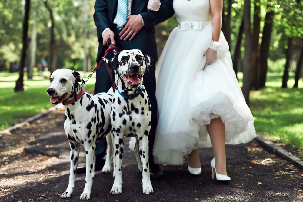 divorce and dogs